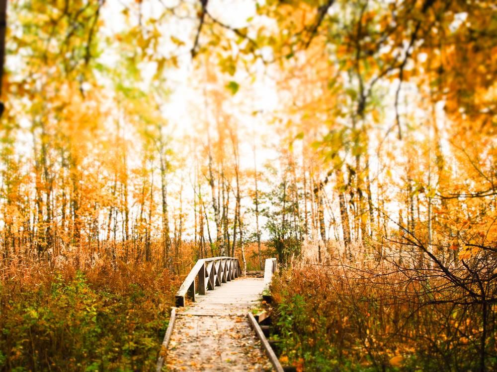 Die zaghaft hinter den Wolken hervorlugende Herbstsonne taucht den Naturpfad in ein goldenes Licht